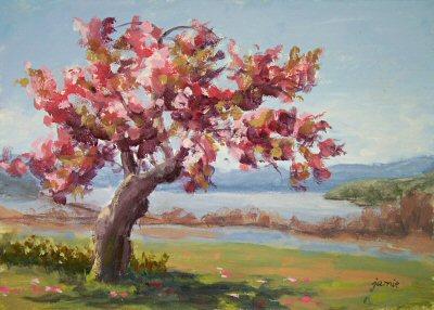 080501-cherry-blossom-day-5×7-400.jpg