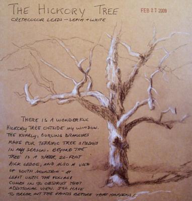 090227-sketch-hickory-tree-600