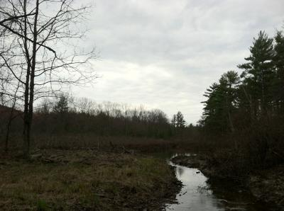 120326-Overcast-Morning-by-the-Beaver-Pond-5x7-starting-scene-720