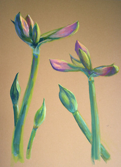 130129-Amaryllis-Budding-11x15-airbrush-550v