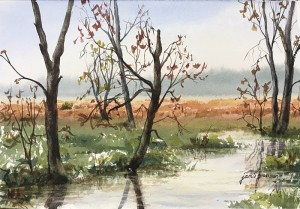 170601 Spring in the Great Swamp 7x11 wc 700